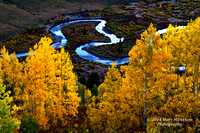 Early Light on Stream and Aspen